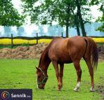 Koń, Konie