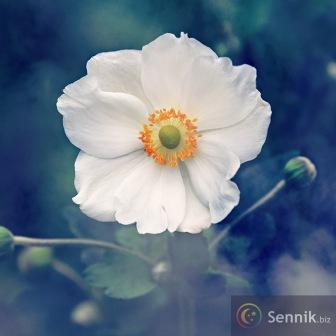 Sennik Kwiaty Znaczenie Snu