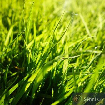 Rne odmiany rolin kluczem do zdrowych trawnikw