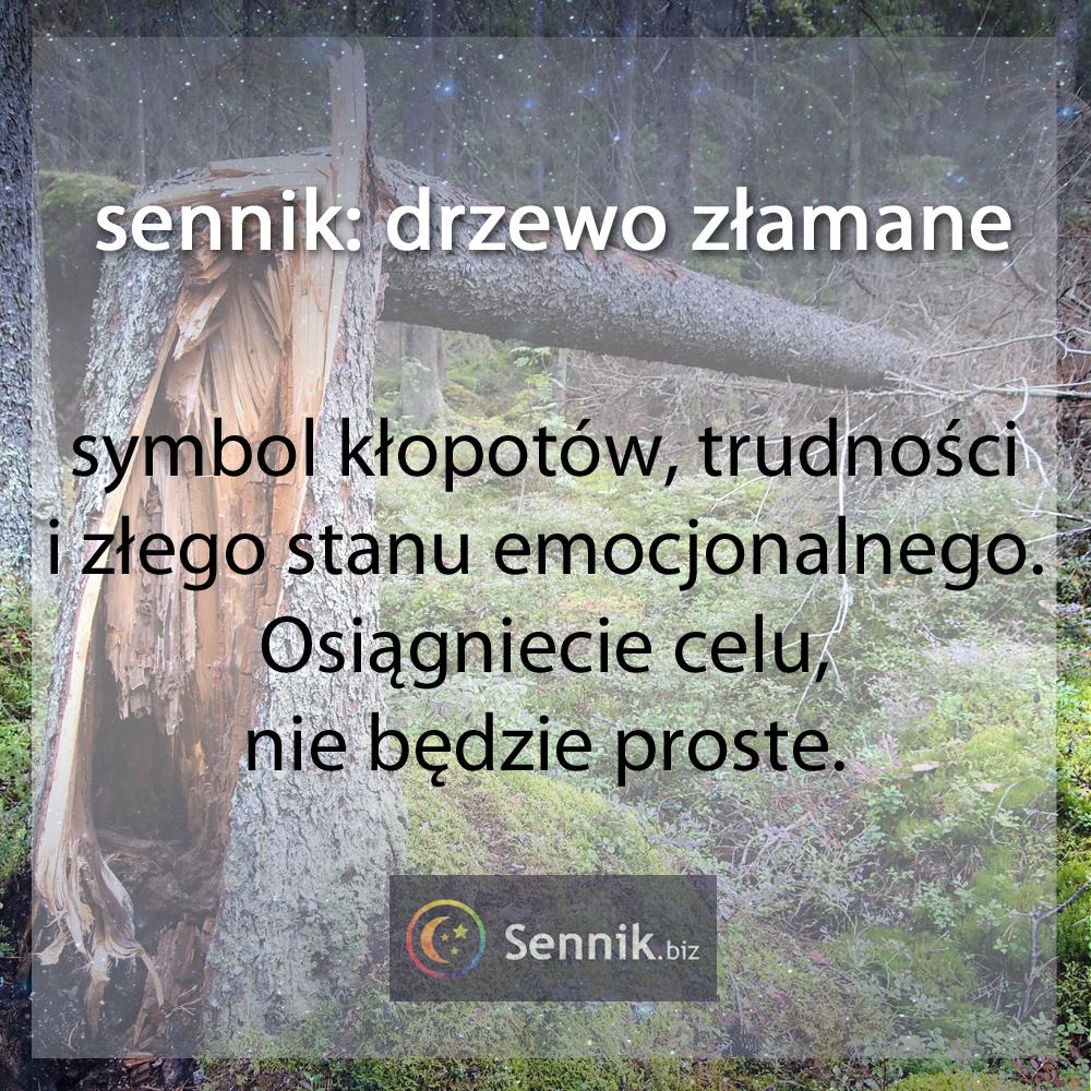 sennik drzewo - drzewo złamane