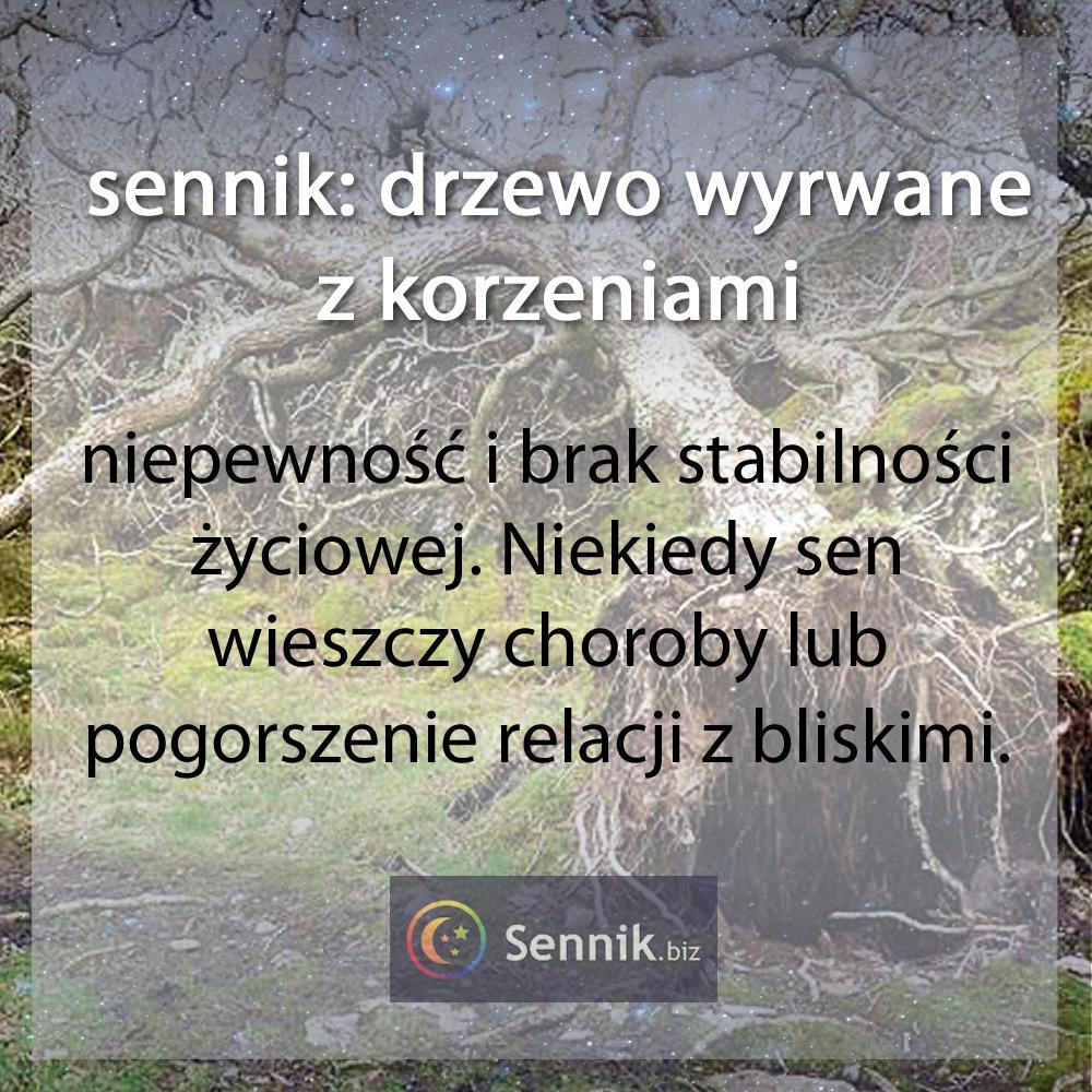 sennik drzewo - drzewo wyrwane z korzeniami