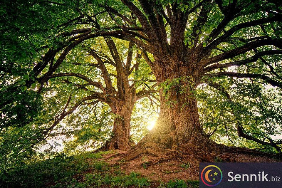 drzewo sennik