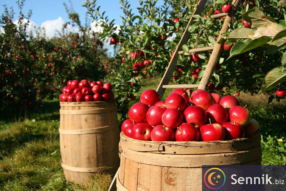 jabłka sennik