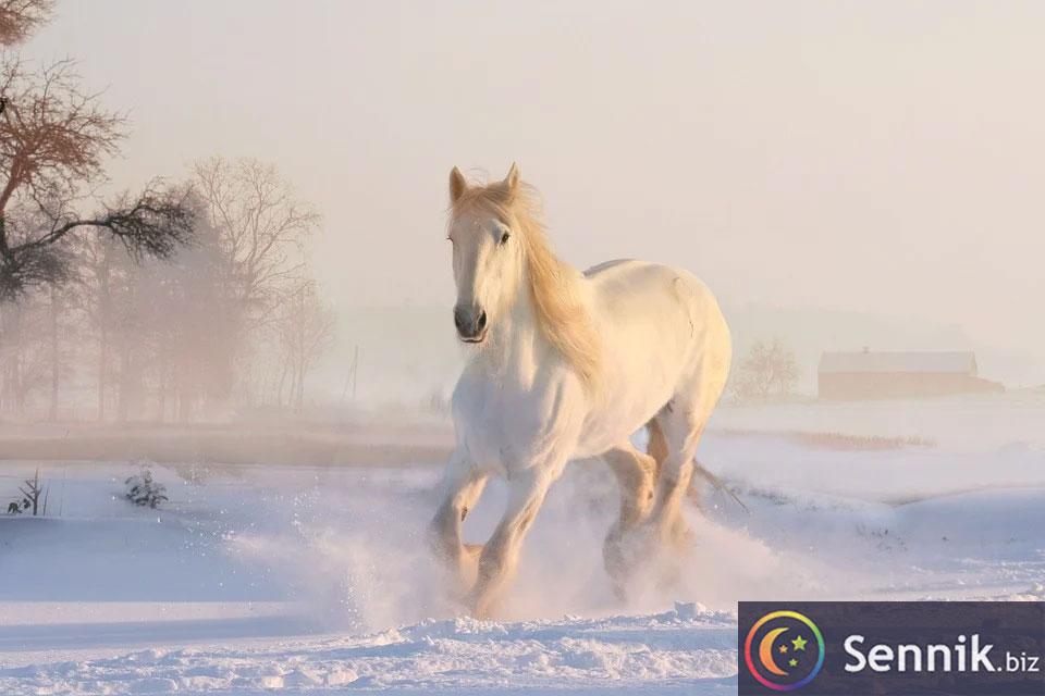 koń sennik