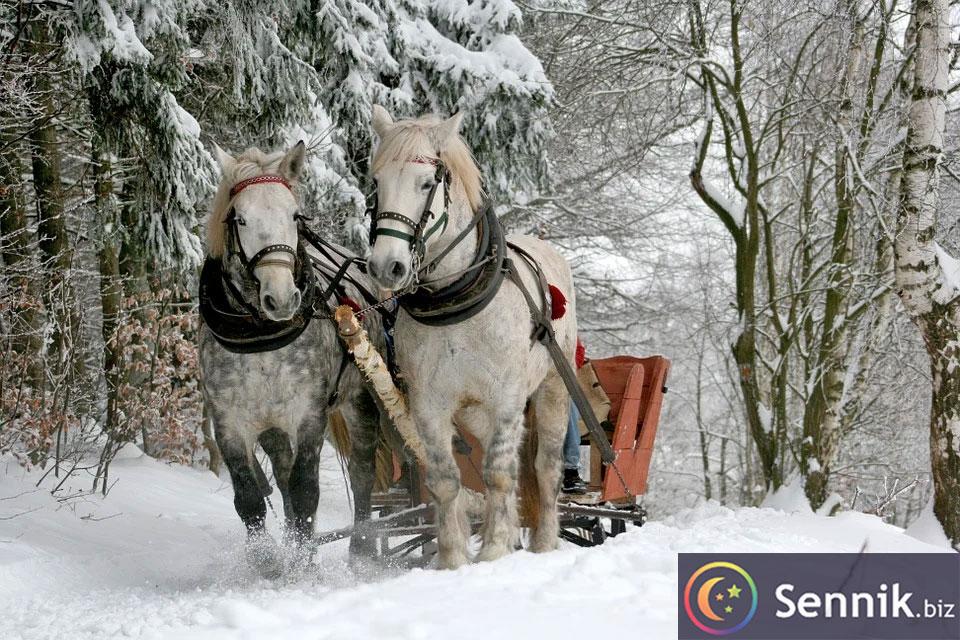 konie sennik