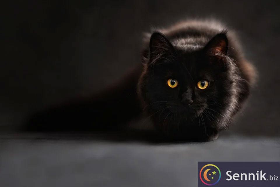 kot znaczenie snu