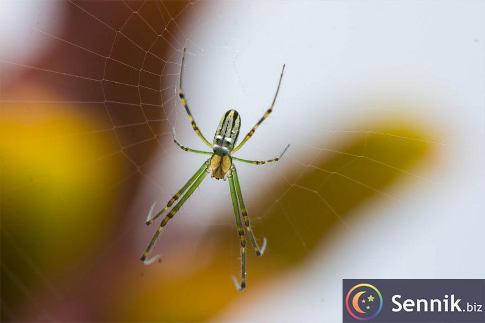 sennik pająk