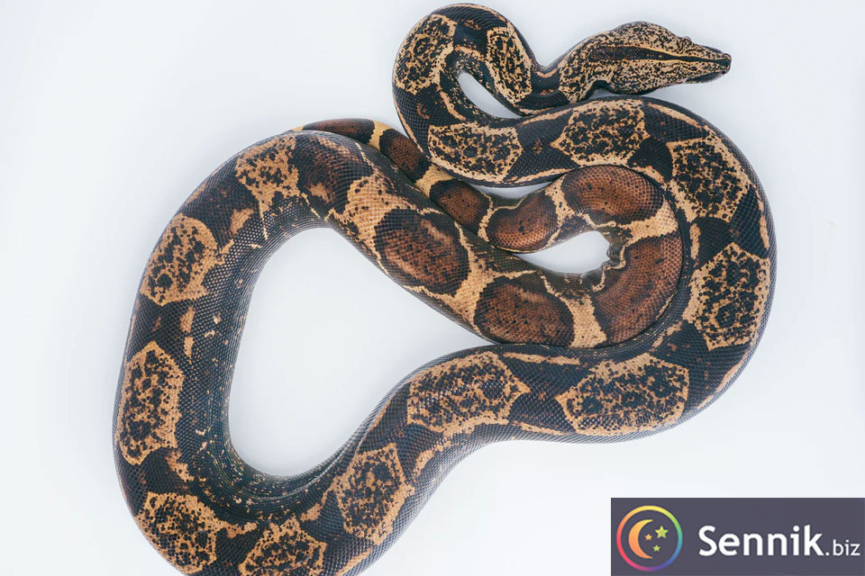 sennik wąż