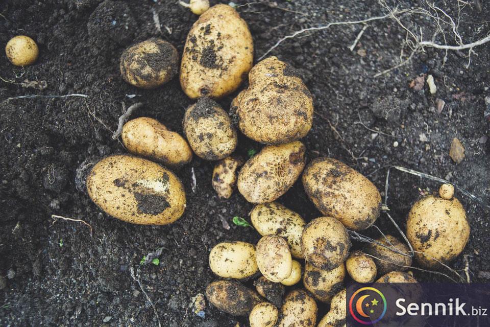 sennik ziemniaki