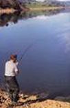 ³owiæ ryby